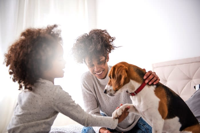 Choose the right pet insurance