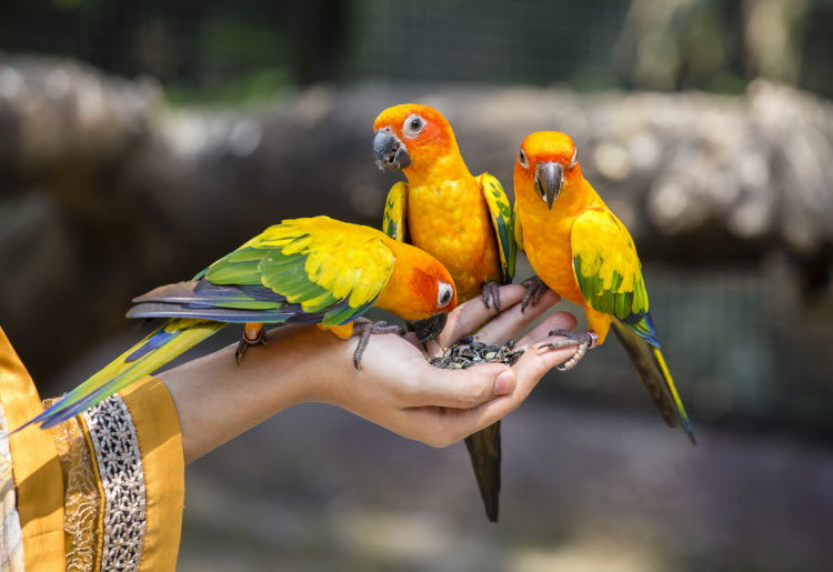 Top Exotic Pet Insurance Providers of {year}