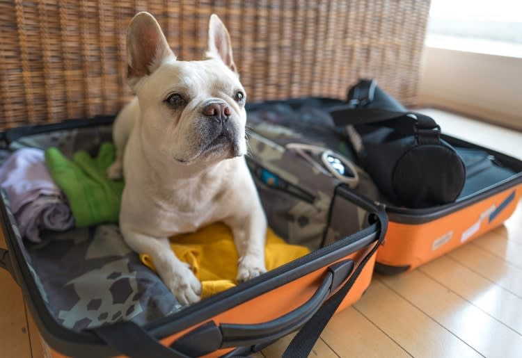 Travelling with your pets