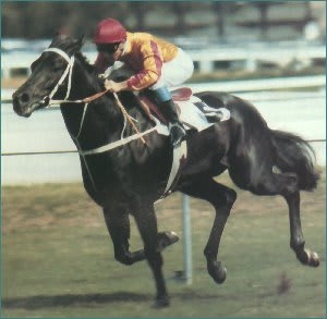 Kingston Town Champion Australian Racehorse
