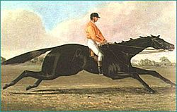 The Barb Racehorse