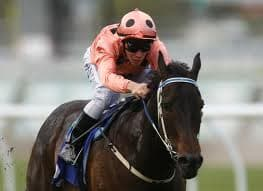 Black Caviar Race Horse