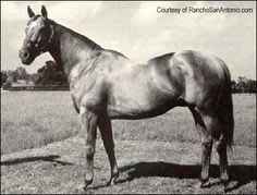 star kingdom racehorse