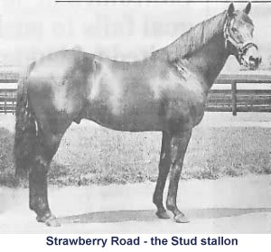 strawberry road racehorse