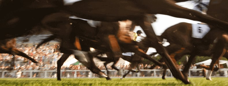 How To Place A Bet On Horses